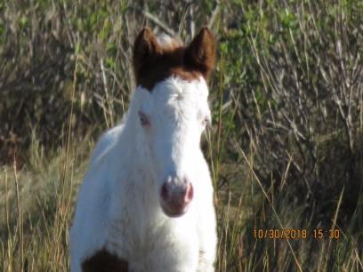 medicine hat foal2